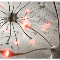 Neurons_NLP